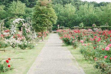 Great Garden Design Ideas for the Perfect Garden
